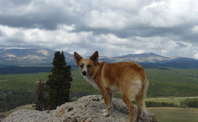 High Park Lookout & Sheep Mountain, Bighorn Mountains, Wyoming (8-5-14)