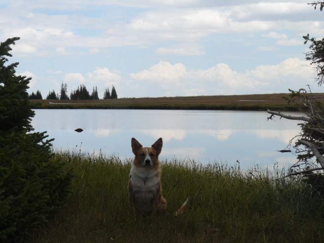 Lupe near the NW end of the big pond on Libby Flats.