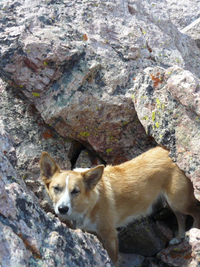 Lupe holed up in a safe spot in the rocks just below the very top of the left prong.