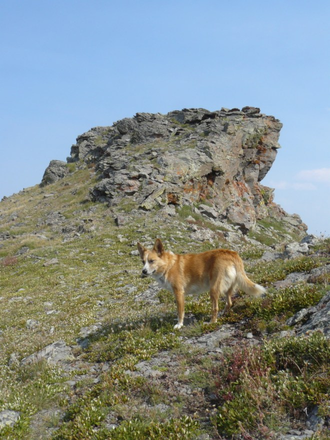 Lupe nears the second block of rock and true summit of Orno Peak.