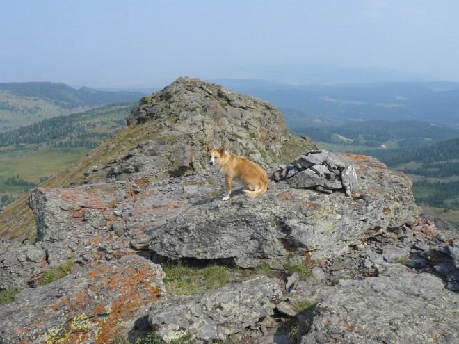 Lupe reaches the summit of Orno Peak! Photo looks E.