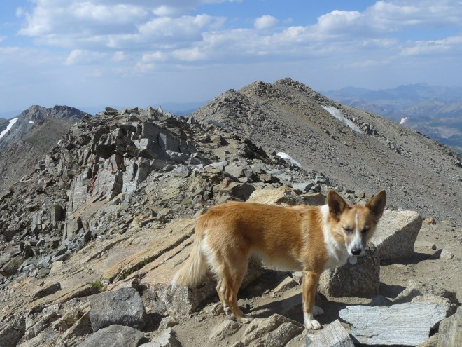 Lupe up on the ridgeline. The summit of Mount Massive is now in view. Photo looks N.