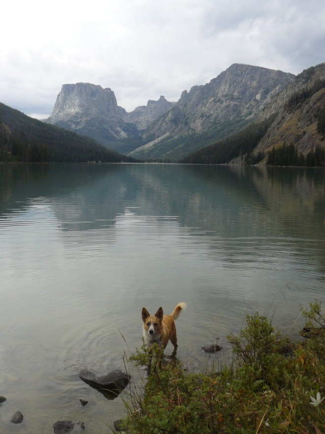 Lupe goes wading in Upper Green River Lake.