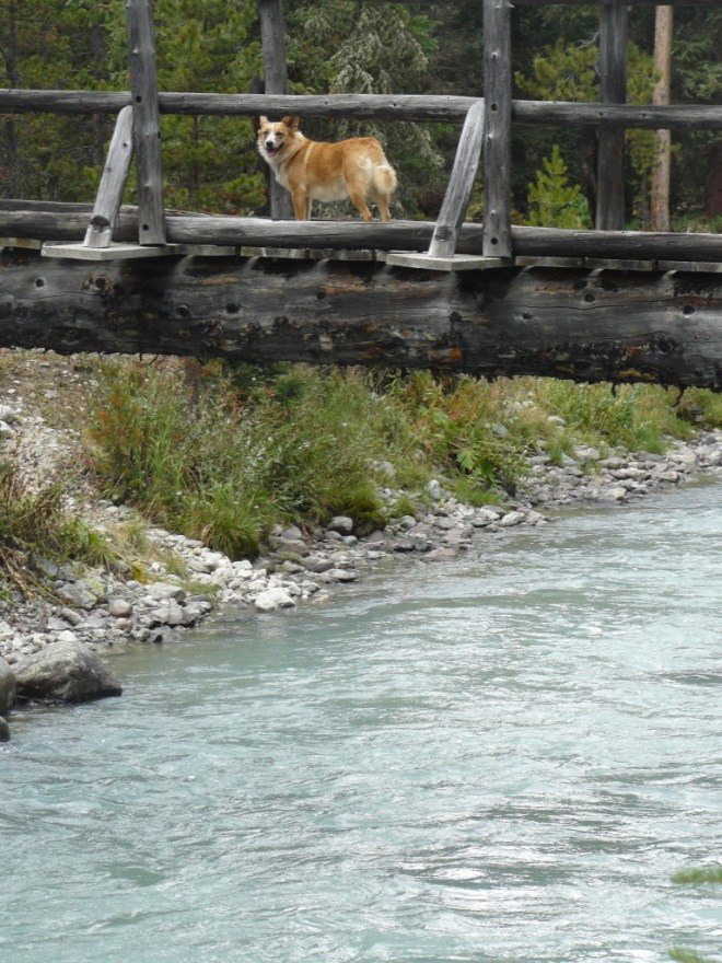 Lupe reaches the footbridge across the Green River to the upper end of Beaver Park.