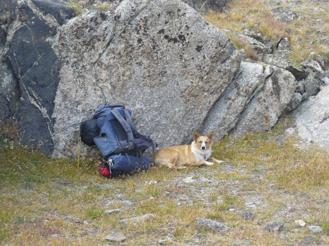 It was windy up high near Arrowhead Lake and Jackass Pass. Lupe took shelter near these big rocks and had a little rest.
