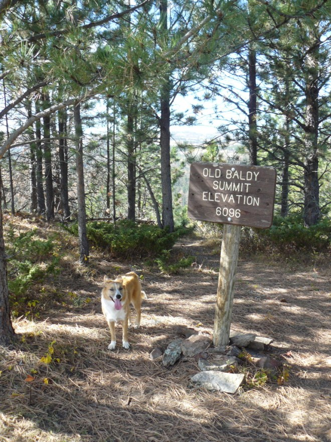 Lupe on Old Baldy Mountain 10-11-15