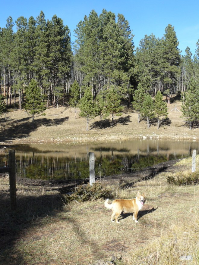 Lupe amidst the scenic splendor of the middle stock pond in upper Bear Canyon.