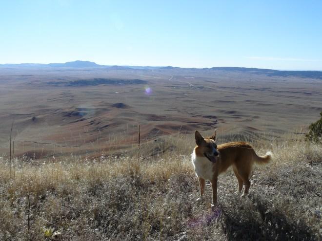Inyan Kara Mountain from Sundance Mountain. Photo looks S.