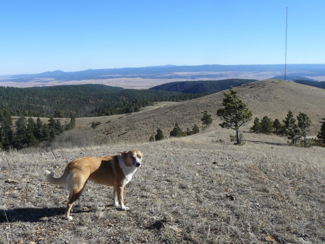 Lupe not enjoying the wind too much on Warren Peak. Photo looks SE toward the Black Hills of South Dakota. Terry Peak is the highest point in the center on the far horizon. Crow Peak is the rounded mountain on the horizon on the L.
