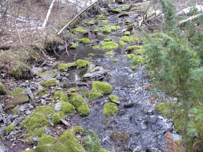 """Mossy Spot"" in Nugget Creek is just a bit N of the junction of USFS Roads No. 249 & 249.3B."
