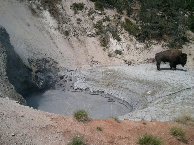 Yellowstone NP, WY 8-12-12