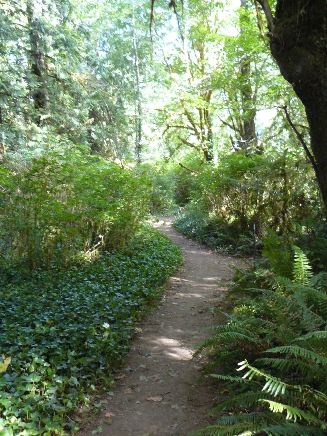 This awesome forested trail went right through the Falls Creek campground near Lake Quinault.