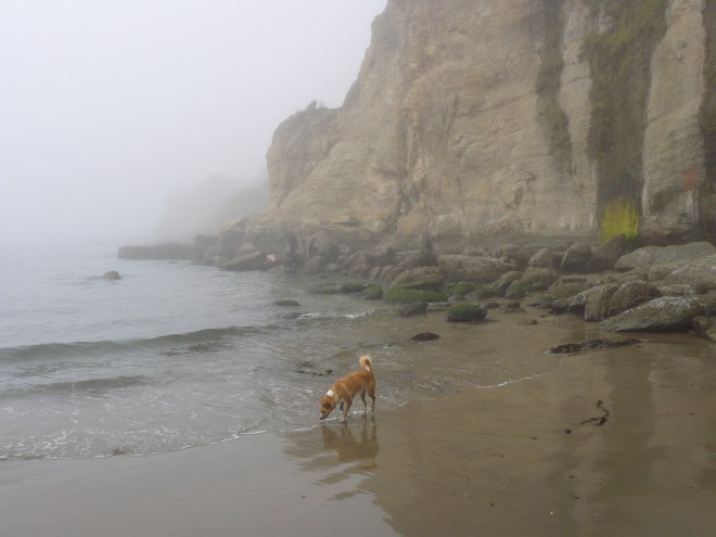 Lupe explores the mysterious foggy beach just S of the Devil's Punchbowl on the Oregon coast.