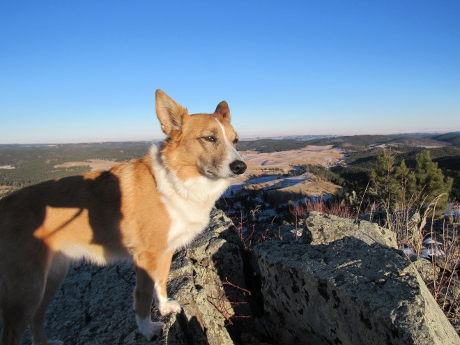 Lupe surveys the rest of the mountain from the top of Peak 5800. Nope, not seeing any mountain lions up here! Photo looks E.