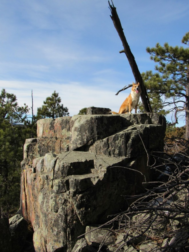 Lupe on part of the large rock outcropping N of Buck Mountain. This isn't even the top of it. Photo looks NW.