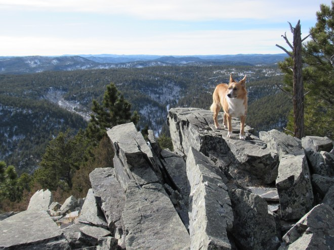 Wow! Kind of a dramatic view to the SW. Even though Buck Mountain isn't all that high compared to parts of the Black Hills, it sure felt like Lupe was way up there!