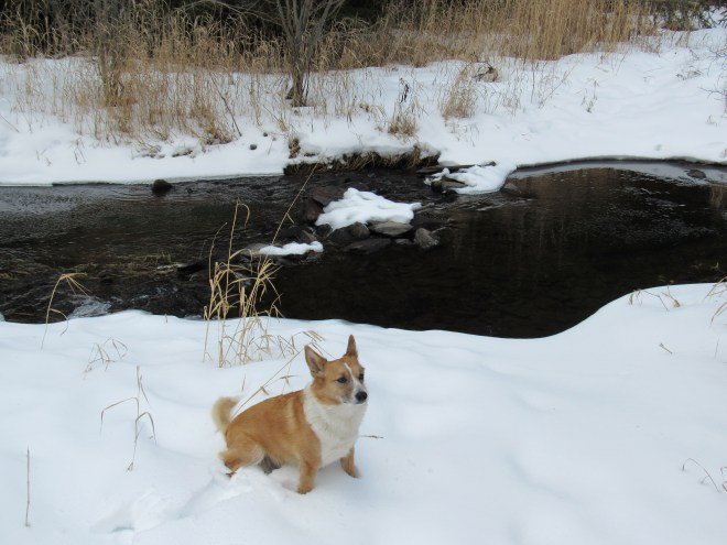 Lupe at South Boxelder Creek. This was as far upstream as Lupe could go down in the deep valley. The creek was too wide for SPHP to cross here.