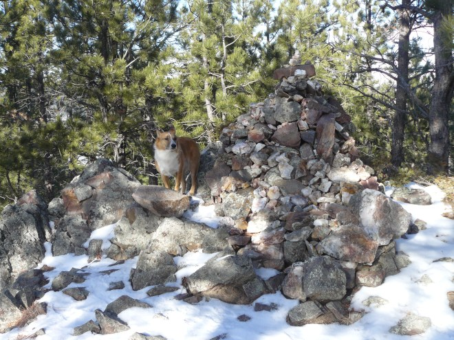 Lupe reaches the summit cairn on Thrall Mountain to claim her peakbagging success. Someone else had already beat her to the top of the mountain in 2015, as evidenced by human tracks Lupe and SPHP saw in the snow.