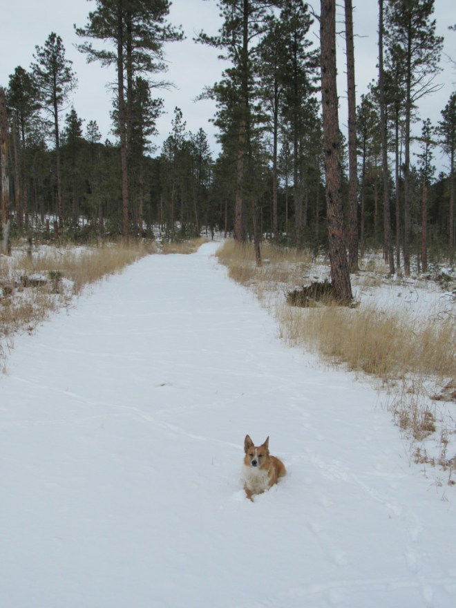 Lupe enjoying the snow on USFS Road No. 414.6K. Green Top (5,360 ft.) can be seen between the trees on the L.