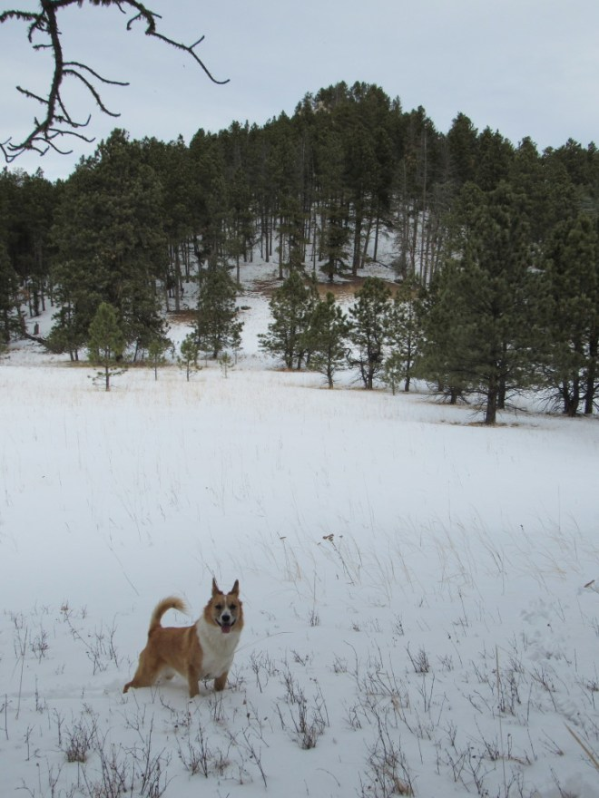 Lupe reaches the snowy clearing S of the limestone cap on White Mansion. Photo looks N.