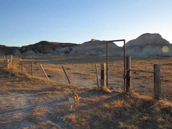 Lupe and SPHP went through this gate. The single track trail to the top of White Butte started on the other side of the gate. Photo looks SSW.