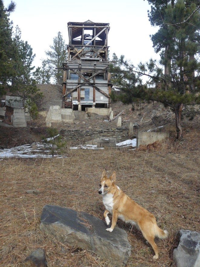 Lupe reaches the ruins of the old Gold Mountain mine. Photo looks N.
