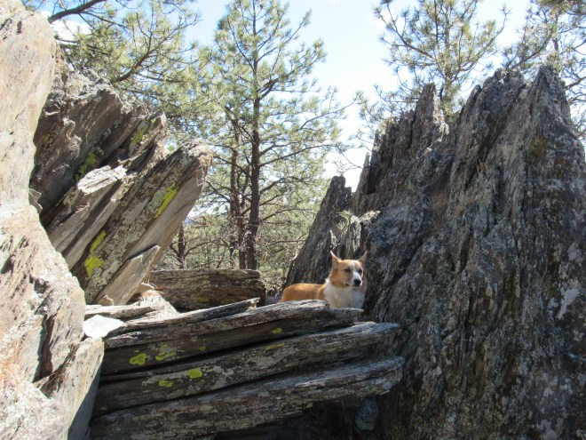 Lupe among the rocks at the 2nd high point NE of Echo Peak. Photo looks E.