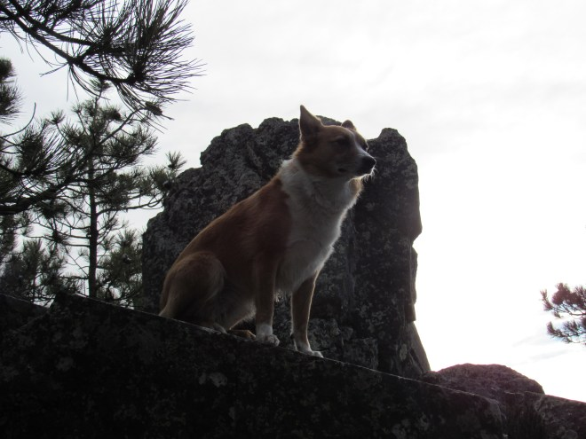 Lupe sits high up near the very tallest rocks on Bluelead Mountain. Photo looks W.