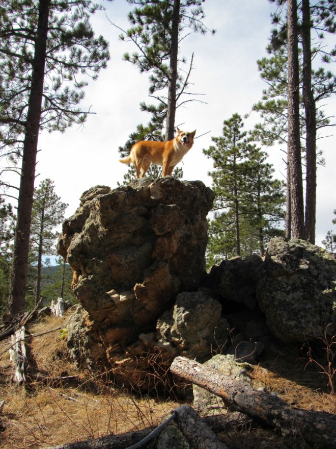 Lupe on the American Dingo display rock.