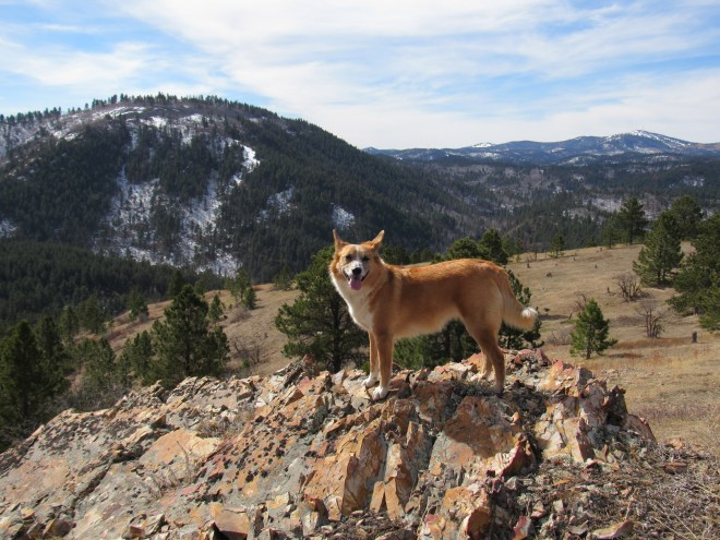 Shortly before reaching the summit of Polo Peak, Lupe came to this rock outcropping. In the background are Mount Theodore Roosevelt (L), Deer Mountain (snowy peak on the far horizon R of Center), and Terry Peak (R). Photo looks SSW.