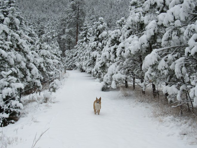 Lupe in a winter wonderland on Deerfield Trail No. 40, shortly after setting out from the Silver City trailhead.