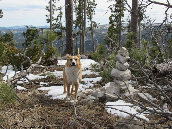 Lupe at the Odakota Mountain summit cairn. Photo looks S.