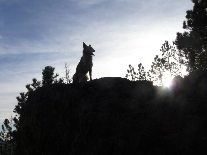 Lupe strikes a dramatic Carolina Dog pose on the E summit of Peak 6600. Photo looks SW.