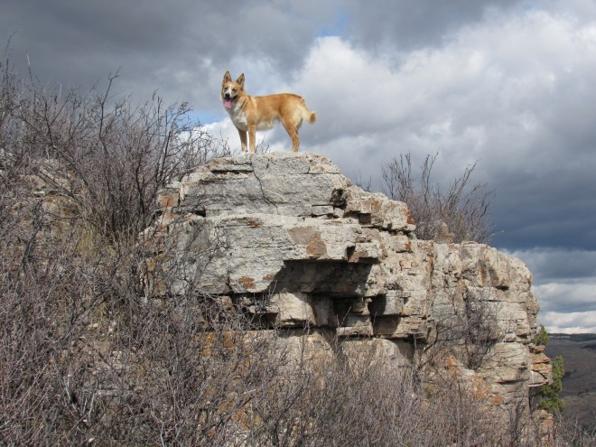 Lupe stands at the top of a small limestone outcropping on the E side of Red Butte. Photo looks N.
