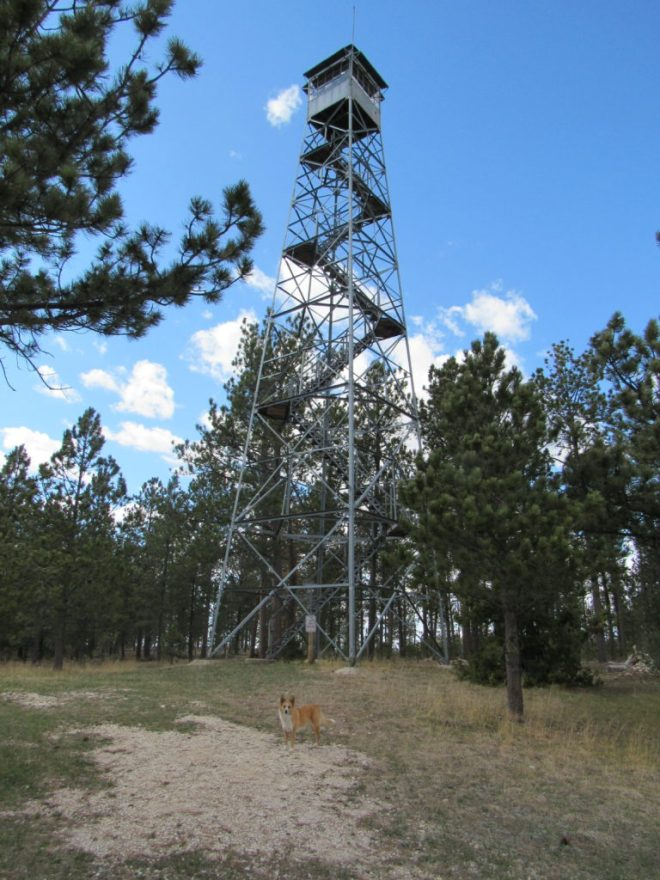 Lupe arrives at the Summit Ridge lookout tower. The last time she was here was over 3.5 years ago way back on Black Hills, SD Expedition No. 30 on 10-14-12. Lupe wasn't even 2 years old yet back then.