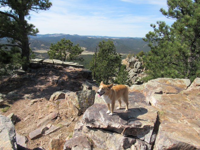 Lupe on the N summit area. Photo looks NNW.