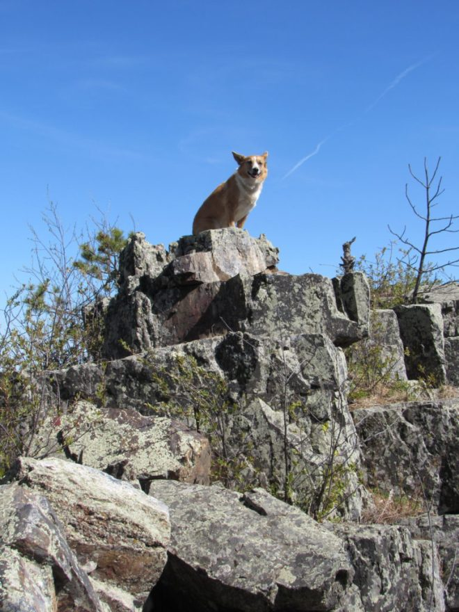 Lupe perches high up on a rock of the S summit area close to where the trail heads down.