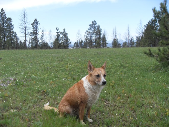 Lupe in the big flat meadow at the summit of Bald Hills. Photo looks W. The sky is beginning to clear!