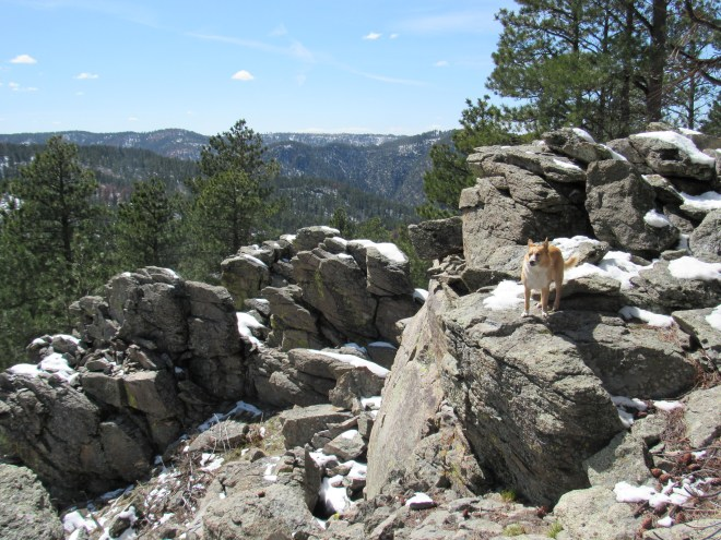 Lupe among the interesting rock formations at the SW end of the highest minor high point N of Tetro Rock. Photo looks NW.