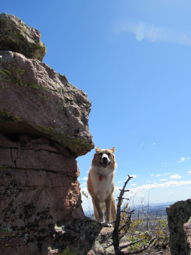 Lupe having fun near the rocks of a high point on the way to the Leg Benchmark. Photo looks ESE>