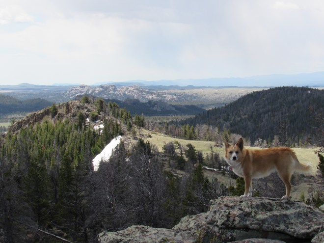 Lupe SE of the Leg Benchmark summit before she left the ridgeline. The nearby grassland is part of Browns Landing. Turtle Rock (8,600 ft.) is the rocky three-pronged peak seen in the distance L of Center. Photo looks S.
