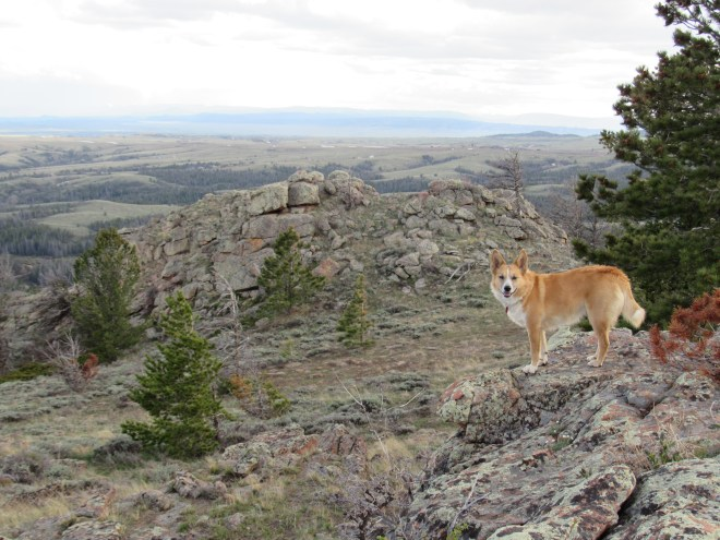 Lupe on the Point Crawford summit. Photo looks SW at the somewhat lower rocky high point that marks the start of the SSW spine of the mountain.