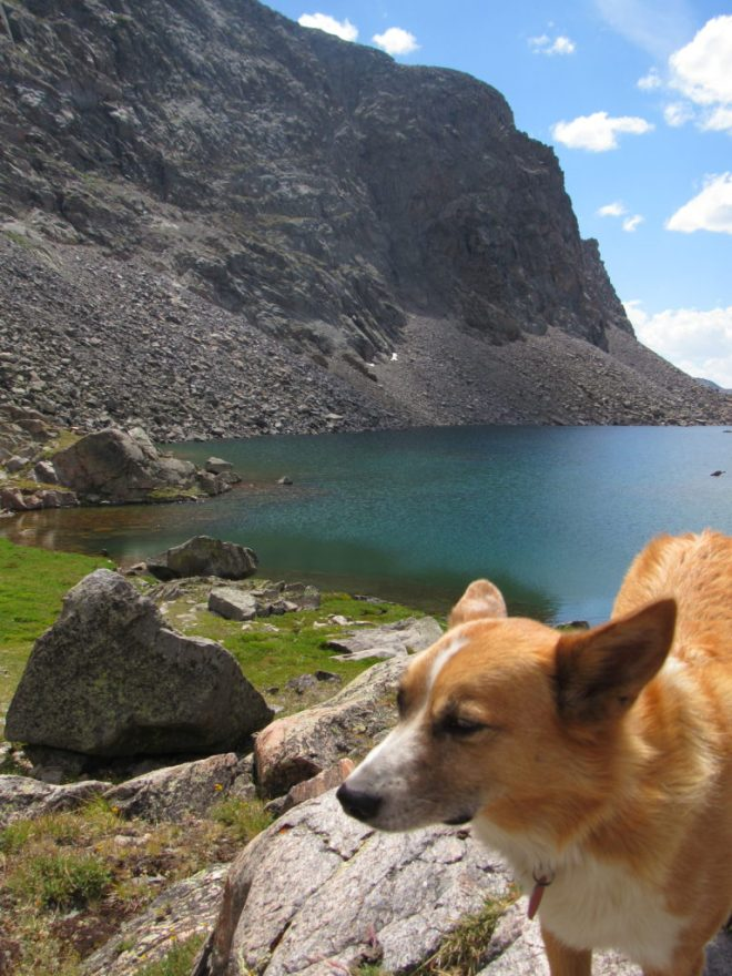 A beautiful American Dingo near beautiful Gunboat Lake. Photo looks SSW.