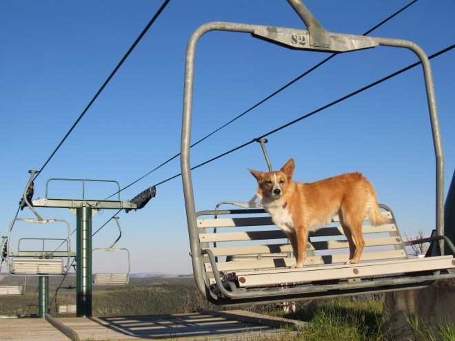 Lupe was a little nervous up on the Showdown ski resort chairlift on Porphyry Peak. She wasn't ready to take up skiing yet, which was just as well, since there wasn't any snow at the end of July.