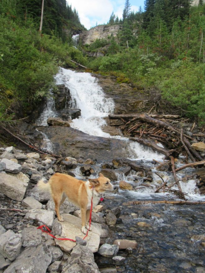 Lupe at the base of the falls on the stream that comes down from Bourgeau Lake.