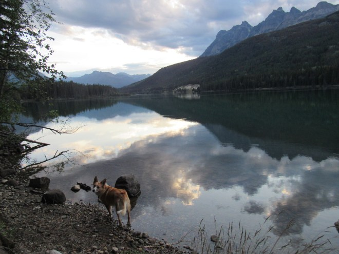 Lupe by the shore of scenic Yellowhead Lake in Mount Robson Provincial Park. Photo looks SW.