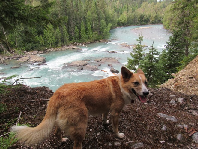 Lupe at one of the few viewpoints above the Fraser River along the Overlander Falls Trail.