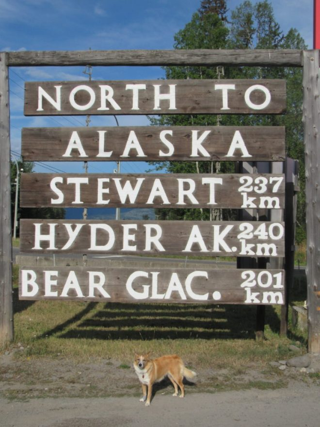 Lupe about to head N on the Cassiar Highway No. 37.