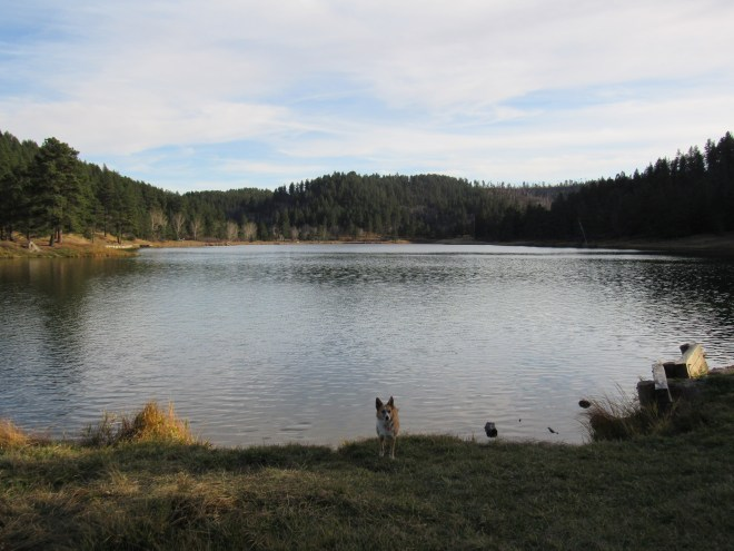 Lupe arrives at Cook Lake, the only lake in the Bear Lodge Mountains. Photo looks S.