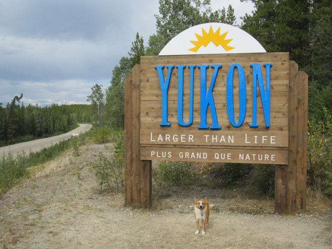 Lupe reached the Yukon border on the afternoon of 8-6-16. It was hard to believe she was really here! Photo looks N, of course!
